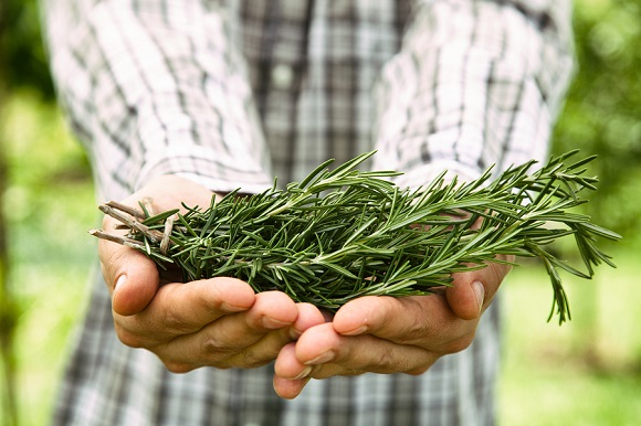 Herbs You can Grow that Help Alleviate Stress