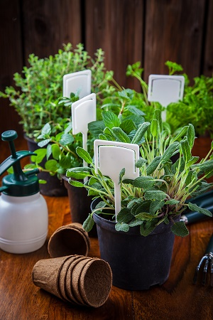 Choosing Ideal Plants for Your Healing Garden