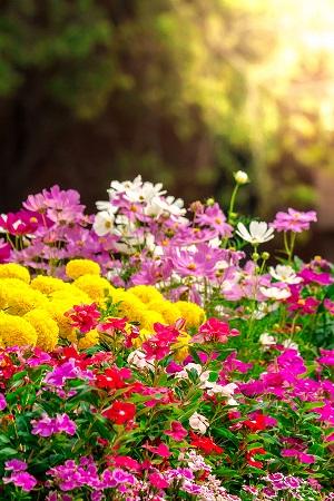 Designing a Healing Garden for Easy Maintenance